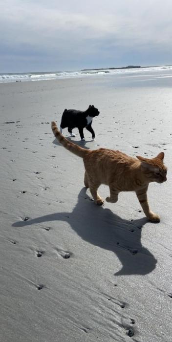 Бесценная реакция кошки на первую поездку на пляж оставила всех в шоке