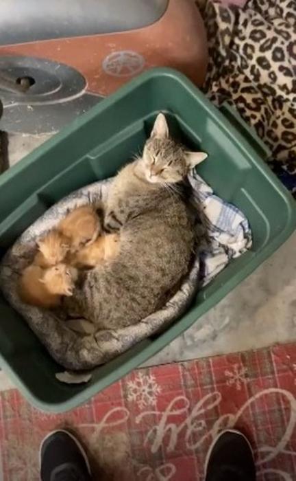 Кошек поймали с поличным, как они крадут котят у других кошек, оставляют зрителей смеющимися