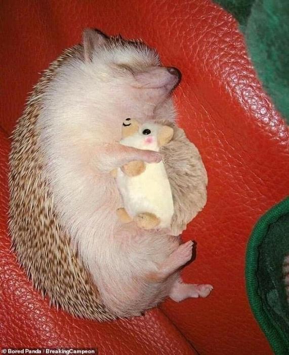 Любители животных делятся очень забавными фото своих питомцев отказывающихся расставаться с любимыми игрушками