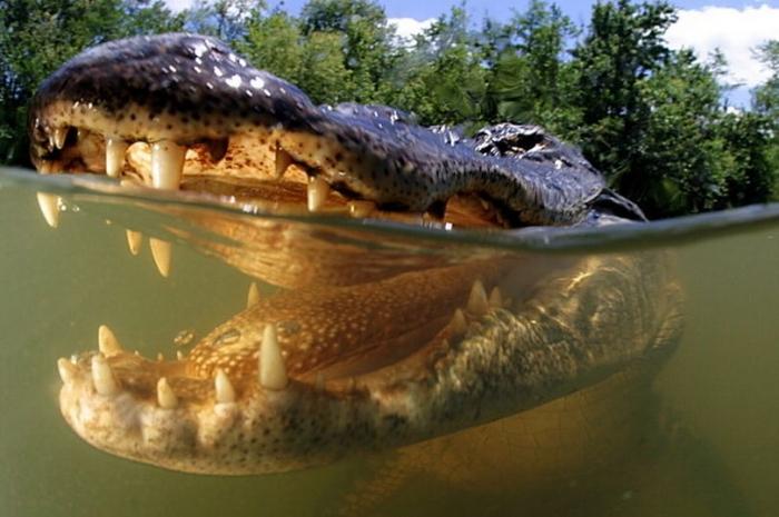 Доктор была съедена после того, как автомобиль погрузился в кишащую аллигаторами воду, а свидетели сами испугались