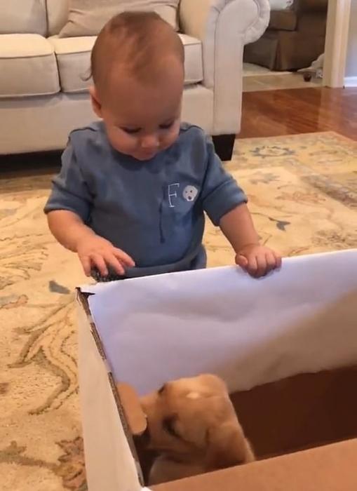 Восхитительный момент, когда мальчик получает собаку на свой день рождения - и эти двое мгновенно становятся друзьями