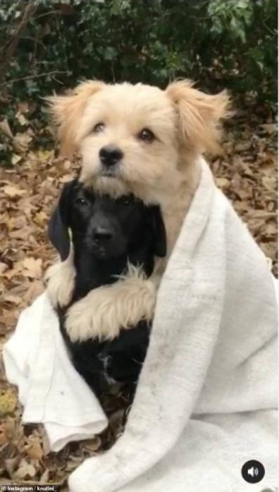 Песик Кнут обхватывает лапами своего приятеля Пола, и спасательные собаки прижимаются друг к другу