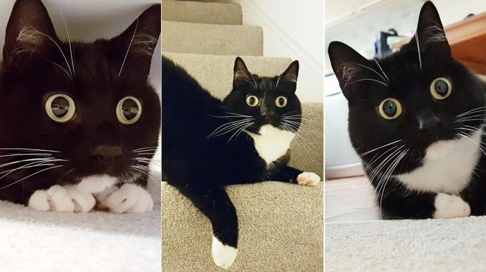 У моей кошки больше подписчиков в социальных сетях, чем у меня