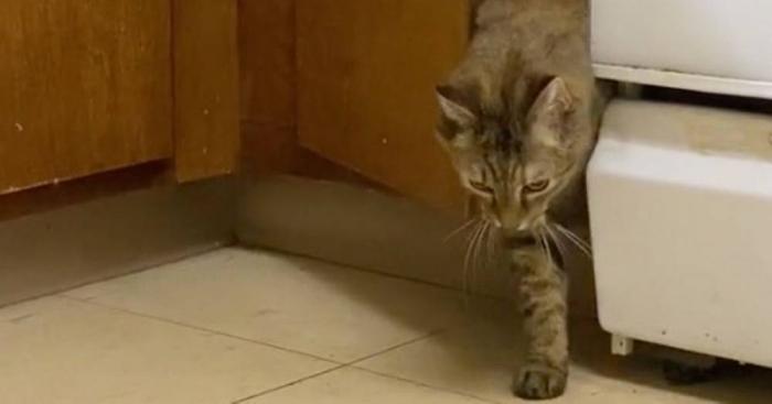Владелец кошки настроил видеокамеру, когда сосед пожаловался, что слышит «постукивания». Фильм испугал зрителей