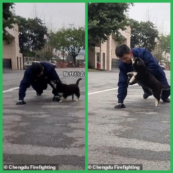 Игривый щенок подкрадывается к пожарному и удивляет его поцелуем, когда офицер тренируется