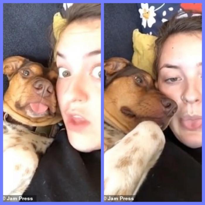 Хозяйка собаки была в шоке, когда собачка копирует ее, высунув язык на камеру, сразу же, как это сделала хозяйка