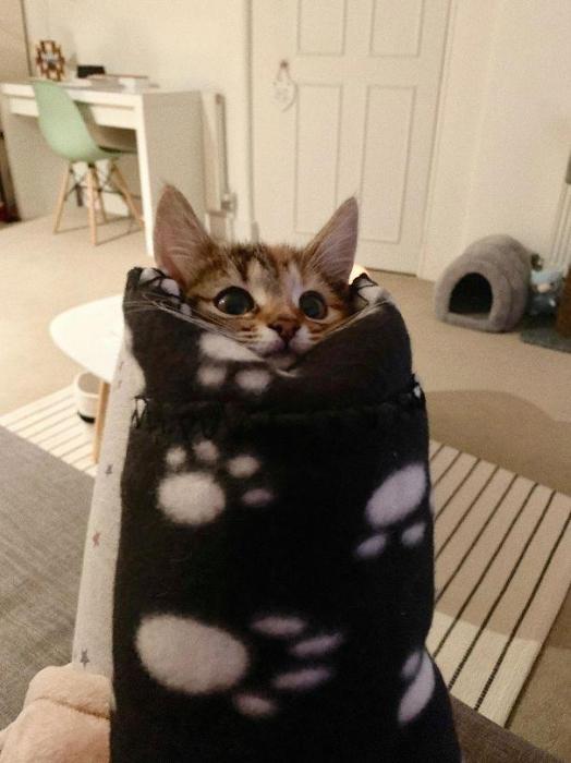 В интернете у любителей кошек появилось новое увлечение. Заворачивать своих кошек в полотенца. «Пуррито», так оно называется