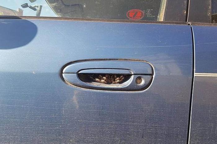 Женщина не садится за руль уже неделю после ужасной находки внутри дверной ручки своего автомобиля