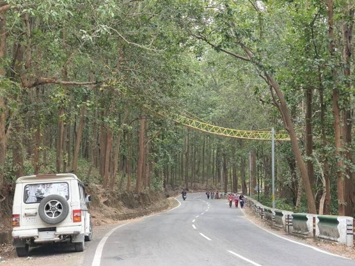 Этот 27-метровый «эко-мост» поможет животным перейти оживленное шоссе в Индии