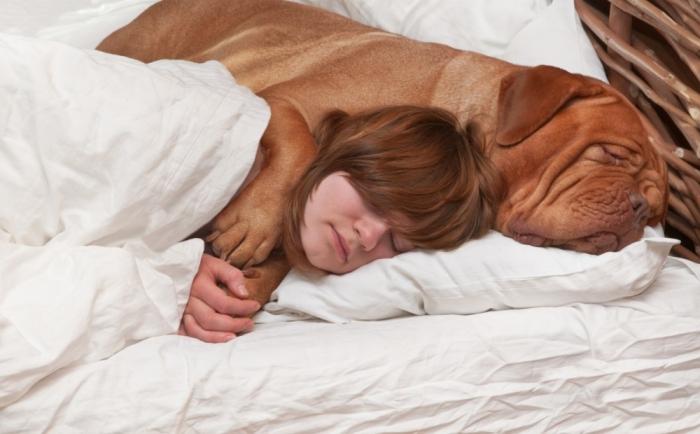 Спать с собакой в одной постели, наверно, лучше, чем делить ее с партнером, утверждает исследование