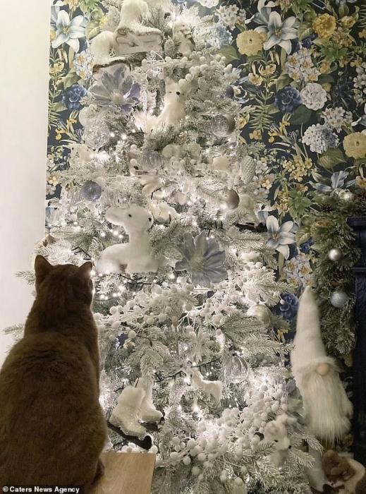 Где котенок! 13-недельный белый котёнок маскируется под украшенную рождественскую елку, но сможете ли вы найти пушистого кота?
