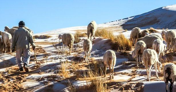Снегопад в пустыне – это настолько невероятно, что становится «знаком библейского пророчества о конце времён».