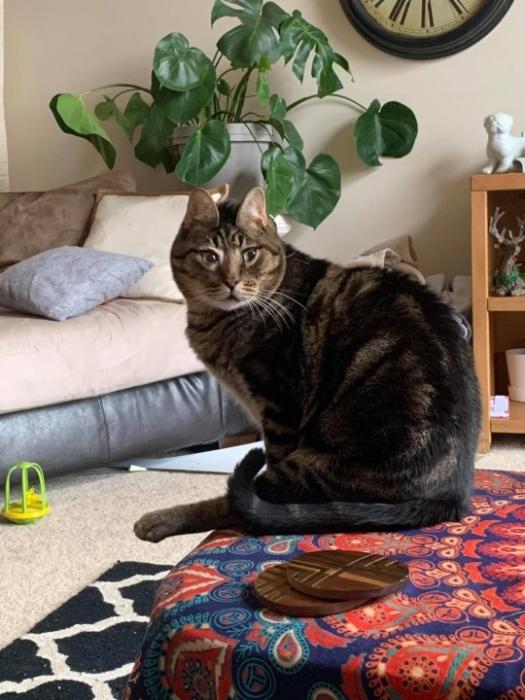 Людям нравится Пинат – кот из приюта с перекошенной мордочкой