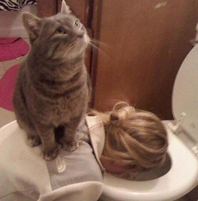 Картинки, которые доказывают, что кошки умеют очаровательно придуриваться