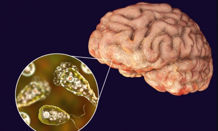 Пожирающие мозг амебы уверенно движутся на север