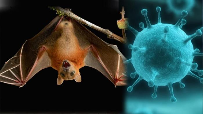 В ВОЗ предупредили об угрозе новой пандемии