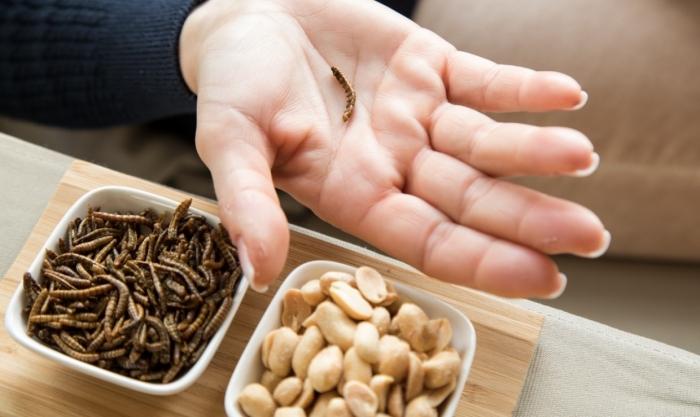 В мире животных: Евросоюз разрешил добавлять в еду мучных червей