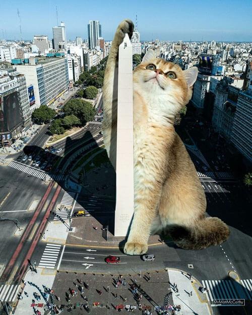 Фотограф населяет мир огромными кошками