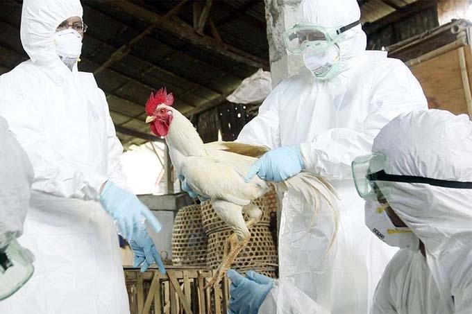 В России подтверждены первые случаи заболевания птичьим гриппом у людей