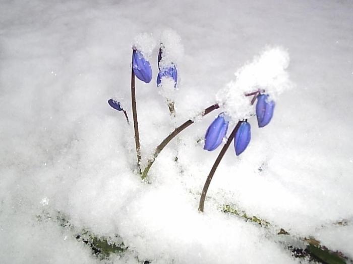 Россиянам не следует ждать ранней весны