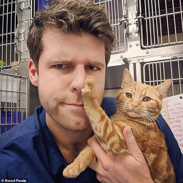 Смешные фото, как кошки реагируют на ласку своих владельцев подтверждают их репутацию сдержанных животных