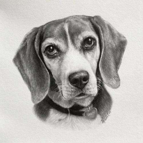 Портреты животных нарисованные карандашом выглядят как чёрно-белые фотографии