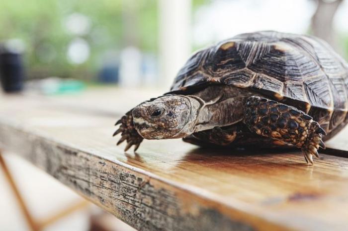 Женщина из Флориды осталась жива, когда черепаха врезалась ей в лобовое стекло