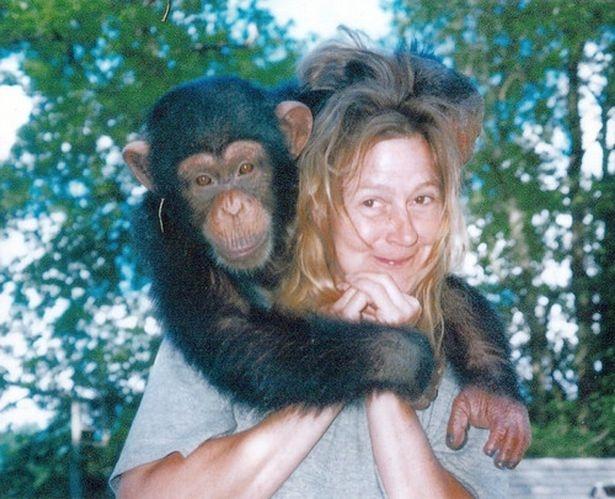 Обезумевший домашний шимпанзе издаёт страшный звук, когда он отрывает лицо женщины и высасывает ей глаза