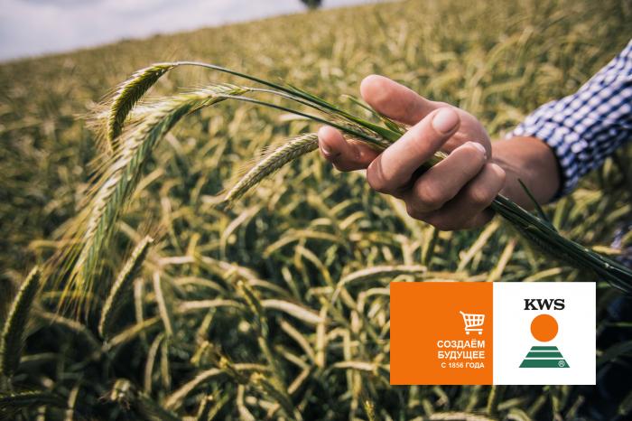Компания КВС РУС в конце мая 2021 года запускает свой собственный  B2B онлайн-магазин семян для сельхозпроизводителей в России