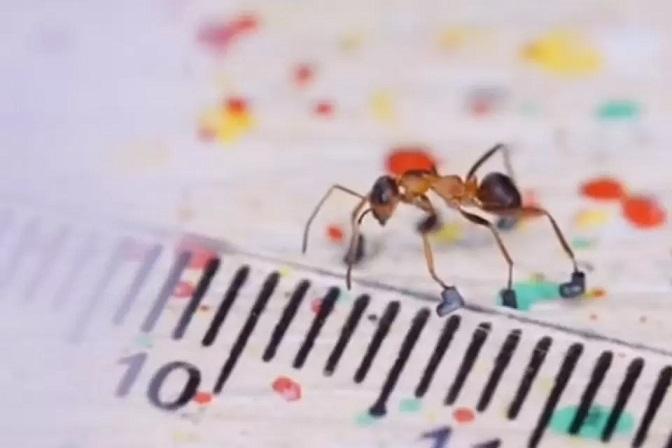 Блогер смастерил для муравья ботинки