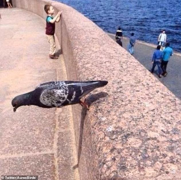 Смешные картинки «птиц с угрожающим поведением» вызвали большой интерес у посетителей сайта