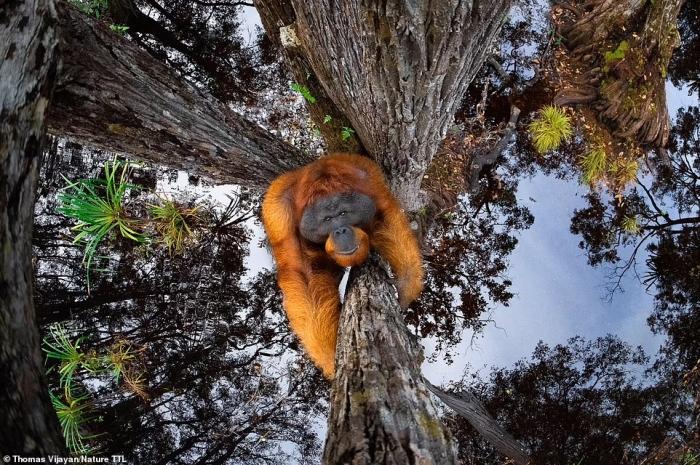 Невероятные фотографии-победители конкурса Фотографии Природы