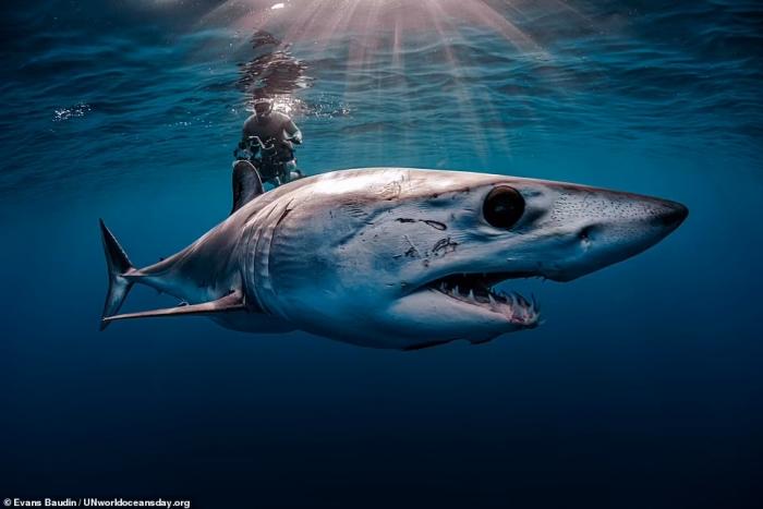 Потрясающие фотографии, выигравшие в фотоконкурсе Всемирного дня океанов ООН. Смотрите!