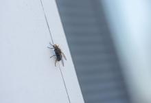 Полезный совет женщины, чтобы не пускать мух на кухню