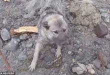 Недавно я писал об оползне в Норвегии. Там спасатели выручили собаку от явной смерти