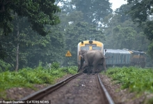 Слоны увернулись от поезда буквально в сантиметре, когда они переходили железнодорожные пути в индийских джунглях
