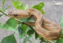 Змея скользит вверх по джинсам мужчины, а он стоит неподвижно в течение 7 часов!