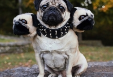 Владельцы собак дают нам посмотреть очаровательные картинки собак с фальшивыми головами на Хэллоуин