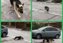 Немецкая овчарка не может справиться с обледенелым тротуаром и скользит на животе