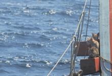 Четыре кошки были спасены с тонущего таиландского военного судна