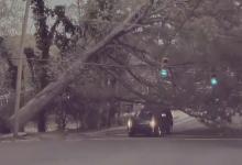Водитель внедорожника едва избежал удара падающего дерева, когда оно рухнуло на дорогу, обрушив линии электропередач и светофоры