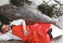 Рыботорговец ложится рядом с чудовищным уловом — палтусом весом в 76 килограмм