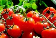 Россельхознадзор приостановил ввоз томатов белорусского экспортёра