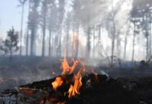 В 15 регионах России прогнозируется повышенная вероятность пожаров