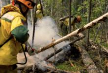 В России за сутки ликвидировали 81 лесной пожар