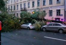 В Петербурге сильный ветер за ночь повалил почти сотню деревьев