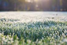 Синоптики предупредили о заморозках в Вологодской области