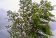В Петербурге предупредили об усилении ветра до 15 м/с
